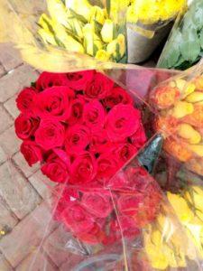Nabídka_růží