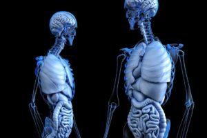 anatomie-cloveka