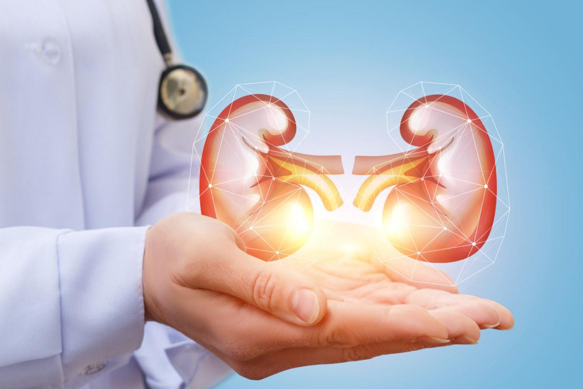 Ledviny-transplantace