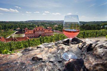 vinice Klara